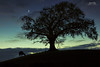 The three of night (bgspix) Tags: nightphotography blue ireland shadow moon tree animals night canon dark ombre bluehour arbre ef24105mmf4lisusm canoneos5dmarkiii