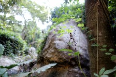 he was as big as my hand (brookecederholm) Tags: giant mexico spider big scary dangerous hand walk web size flashback huge yelapa puertovallarta terrifying humongous giantspider flickrandroidapp:filter=none themexicanspider clearweb goodlucksleeping