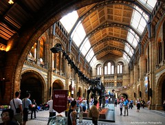 Natural History Museum of London (Rex Montalban) Tags: greatbritain england london europe unitedkingdom rexmontalbanphotography