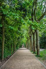 Bajo los pltanos (SantiMB.Photos) Tags: barcelona trees people espaa primavera way walking spring rboles camino path personas planetrees catalua pltanos caminando collserola vallvidrera sal18250