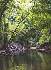 Sardis Creek (Jessica Dye) Tags: trees light usa brown sun sunlight white black reflection green nature water pool leaves creek reflections landscape leaf sticks woods pretty branch floor forrest scenic bank ground brush lazy pile edge flare land arkansas flowing canopy matte glassy sunflare lazyriver mattefinish jessicadye