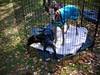GreyhoundPlanetDay2010009