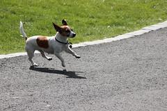 216 av 365 (Yvonne L Sweden) Tags: dog sweden stockholm hund runaway rymling 365foton 3652013