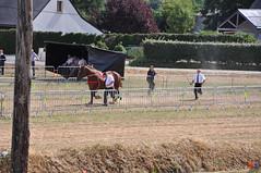 DSC_0222 (- MB Photo -) Tags: de cheval des 09 labour concours 07 vache tracteur vaches chevaux bourg comice agricole comptes 2013 bourgdescomptes  labourer