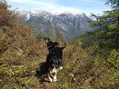 Sage and Dala (Thaddz) Tags: dog mountains puppy washington cascades northcascades sennenhund entlebucher entlebuchermountaindog doublegapfarm