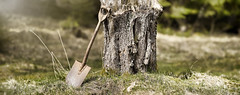 P9 (Robert Björkén (Hobbyfotograf)) Tags: old tree dof pentax shallow 135 shovel träd spade k3 samyang