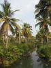 Kerala Backwater Backwaters India Indien Kollam District (c) (oksana8happy) Tags: copyright india green nature water asia asien heiconeumeyer wasser december indian natur kerala palmtrees palmtree grün palme indien backwaters coconutpalm backwater southindia cocotier keralabackwaters cocotiers southasia copyrighted palmen 2014 in coconutpalms indisch godsowncountry munroeisland kokosnusspalme kokospalme keralan keralanbackwaters coconutpalmtree südindien kollamdistrict keralabackwater südasien munroethuruthu munrothuruthu munroisland munroethurutthu munroeturuttu munrothurutthu munroturuttu peringalam perugalam keralanbackwater tp201415