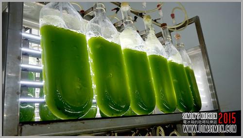 台灣綠藻11.jpg
