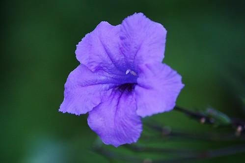 sekuntum bunga