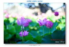 DSC01413 ( Guess TSAI) Tags: movie lens lomo lotus cine projection ussr    8518 35kp1