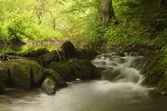 Bachlauf (Fooß) Tags: wood water deutschland ast wald blätter stein baum rheinland pfalz saar felsen pfad steig hunsrück traumschleife dünnbach