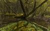 Sunshine in the forest - D8C_7045 (Viggo Johansen) Tags: trees green sol water sunshine forest spring skog vann rogaland vår trær gult yellew grønt vanndam oldthree røssdalen