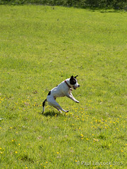 Caught It! (amipal) Tags: dog nature animal action nationaltrust tilly nymans