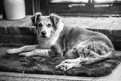 Freckles (Thomas Hawk) Tags: angelesnationalforest bigtujungacanyon california freakles losangeles usa unitedstates unitedstatesofamerica bw dog fav10