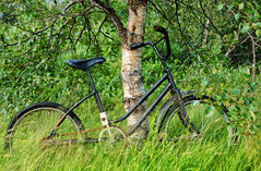 Forgotten... (scrapping61) Tags: scrapping61 2016 iceland laugarvatn garden bicycle