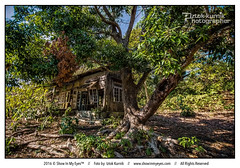 Abandoned wooden house (Iztok Alf Kurnik) Tags: abandoned abandonedbuilding beautiful bigtree empty house iztokkurnik nature nopeople postcard tourism tourist travel travelguide travelphotography traveltheworld tree wallpaper wooden woodenhouse