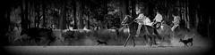 Com a tropa na estrada (Eduardo Amorim) Tags: gacho gachos gaucho gauchos cavalos caballos horses chevaux cavalli pferde caballo horse cheval cavallo pferd crioulo criollo crioulos criollos cavalocrioulo cavaloscrioulos caballocriollo caballoscriollos gado ganado cattle btail bestiami cachorros perros dogs chiens pampa campanha fronteira arroiogrande riograndedosul brsil brasil sudamrica sdamerika suramrica amricadosul southamerica amriquedusud americameridionale amricadelsur americadelsud cavalo         hst hest hevonen  brazil eduardoamorim