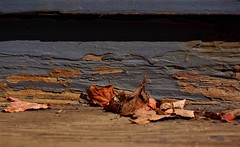 Peeling Away (Professor Bop) Tags: professorbop drjazz olympusem1 peelingpaint autumn fall wilmingtonvermont vt southernvermont vermont porch step leaves autumnleaves
