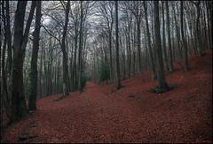 Tarde de otoo (antoniocamero21) Tags: atardecer color foto sony hayas rboles otoo montseny barcelona catalunya natural parque