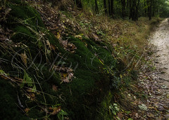 Őszi erdő (Delfinibi) Tags: hungary ungarn magyarország mzuiko pilis erdő forest ősz autumn természet nature natur natural olympusepl5 olympus outdoor olympusm1442mmf3556iir okt kéktúra epl5