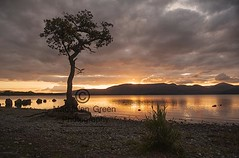 Golden Light over Iconic Tree at Milarrochy Bay - Loch Lomond Scotland (Magdalen Green Photography) Tags: goldenlight iconictree milarrochybay lochlomond scotland scottish scottishlandscapes water calm pretty sunset tranquil magdalengreenphotography mountains tree 3515