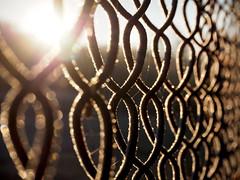 Knitted of sunlight (velvetmeadow) Tags: happyfencefriday fencefriday hff fence wirefence sunlight rays backlight backlit bokeh texture pattern velvetmeadow