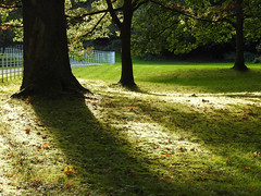 Rest the Mind (Lancashire Lass ...... :) :) :)) Tags: wood sunlight quote shadow autumn trees fence grass leaves haighton preston lancashire ribblevalley squireandertonswood october