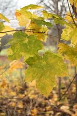 IMG_8999 (Geoff_B) Tags: badockswood bristol walkinthewoods autumn november unprocessed unedited