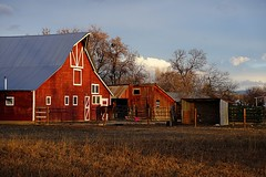 Morning Colors (Let Ideas Compete) Tags: barn farm rural bucolic rustic redbarn horse