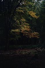 Masseys (Daire Quinlan) Tags: film 35mm colour c41 diy fujihunt agfa 200 200asa asa200 m42 helios 442 russian saturday walk dublin woods beech lostinthewoods massey estate park coillte portrait chinon ce3