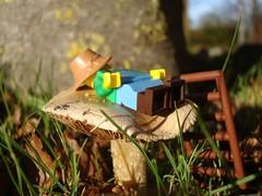 Siesta (captain_joe) Tags: sooc toy spielzeug 365toyproject lego series15 minifigure minifig farmer