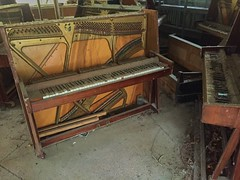 Pripyat Piano Shop-(Chernobyl Exclusion Zone)_8 (Landie_Man) Tags: none pripyat chernobyl looted looting disused closed music piano pianist culture bars beats frets instrument grand fine radioactive radiation ionising shop store shut buy bought purchased forgotten play nuclear power plant the zone ukraine ussr cccp ccpp soviet union