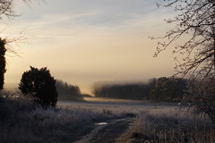 Frostmoln (tusenord) Tags: landscape frost clouds sunrise vrinnevi norrköping sweden