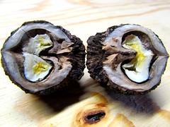 Split (marcus gordianus) Tags: walnuts shells harvest closeup nature blackwalnuts halfs split nuts schwartzewalnuss walnuss nsse