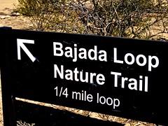 The Road Not Taken (Chic Bee) Tags: naturewalk sabinocanyon tucson arizona southwesternusa americansouthwest trail