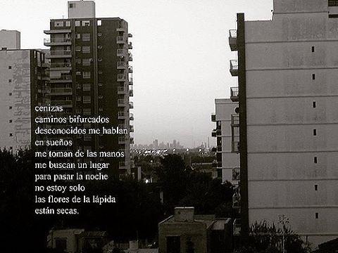 #poesía #poema #palabras #fotopoema