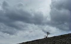 ambiance de crise (b.four) Tags: sky cloud tree nuvola ciel cielo nuage albero arbre dda alpesmaritimes andon coth abigfave diamondclassphotographer flickrdiamond citrit cherryontopphotography rubyphotographer mygearandme audiberghe