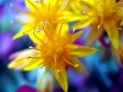 colors (SS) Tags: camera new pink blue light red italy orange white flower macro nature colors beautiful yellow composition contrast canon garden photography countryside spring focus colorful paint glare peace dof purple angle bokeh pov perspective scenic gimp powershot crop framing fiore bianco nero tone lazio celeste blooming atmophere natureselegantshots a480 fleursetpaysages
