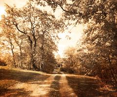otoo (mariuca.l) Tags: autumn trees fall sepia rboles camino path otoo duetos frenteafrente fotosconcoraznypasin