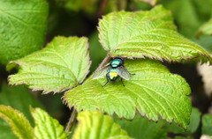 One Greenbottle (Mark Bowerbank) Tags: one greenbottle