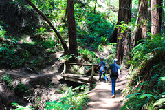 (kathyparmisano) Tags: california nature photography hiking muirwoods hikers