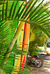 Kayaks (moke076) Tags: vacation tree colors leaves bike bicycle hawaii paradise kayak bright maui palm 2013