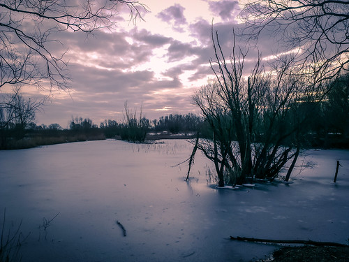 Cambridgeshire Fens in Winter-1