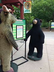 moose and bear (timp37) Tags: bear apple animal zoo illinois chats stuffed 5 five moose iphone 2013 brookield