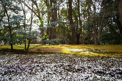 snow in early spring (Shenghung Lin) Tags: snow japan kyoto  kansai  kinkakuji
