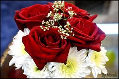 Party (Norah_Studio) Tags: pink flowers blue red roses party orange white green colors beautiful rose yellow rainbow nikon colorful purple enjoy vase partydecoration wonderfulworldofflowers d5100 nikond5100 d5100nikon