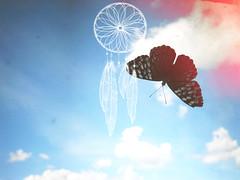 (Elefthrios) Tags: life sky beautiful butterfly photography cu vida borboleta