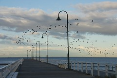 Flight at Port Melbourne (Salle-Ann) Tags: seagulls pier streetlights flight earlymorning victoria portmelbourne