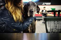 White Sox Dog Day (k.james) Tags: stella dog chicago hug baseball sox canine greatdane whitesox scoreboard baseballfield mlb concessions outfield kenthenderson dogday uscellularpark diamondvision whitesoxdogday