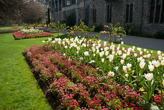 A Lovely Sight (Jocey K) Tags: flowers newzealand christchurch colour building spring flowerbed botanicgardens tulps foopath